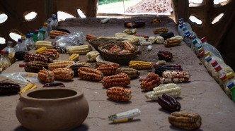 seed preservation